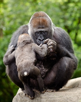 mother&child monkey